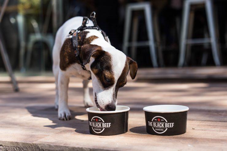 The Black Beef é mais uma opção pet friendly em Goiânia | Foto: Rômulo Juracy
