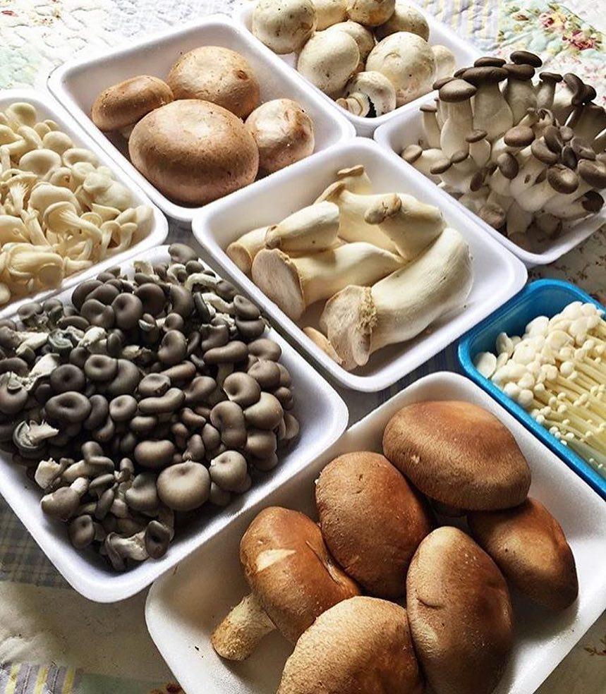 A loja Cogourmet propõe substituir a carne vermelha por cogumelos, durante a Quaresma | Foto: Divulgação