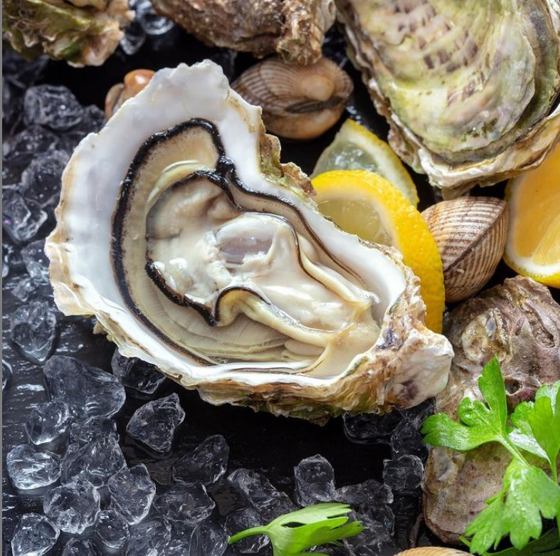 Litoral tem ostras frescas por encomenda